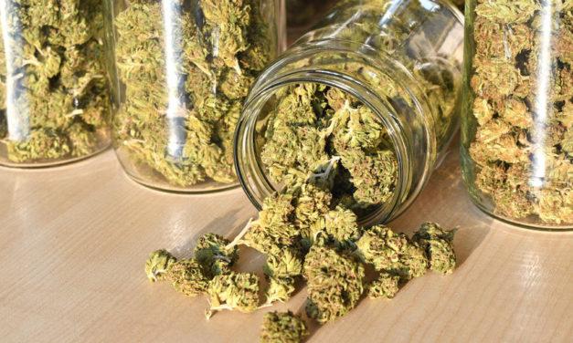 The 10 Greatest Marijuana Strains of All Time