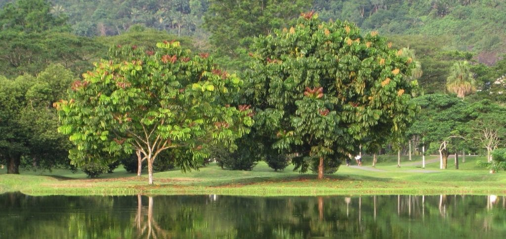 Tree landscape with lake on front