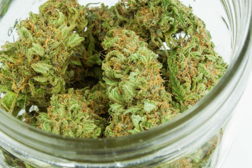 Plant green kush in clear glass jar