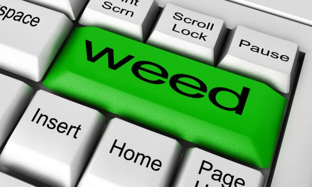 Weed Terms: A Doper's Dictionary