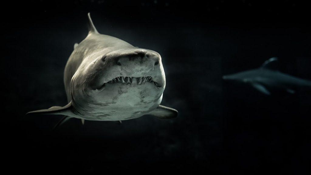 Shark in dark waters